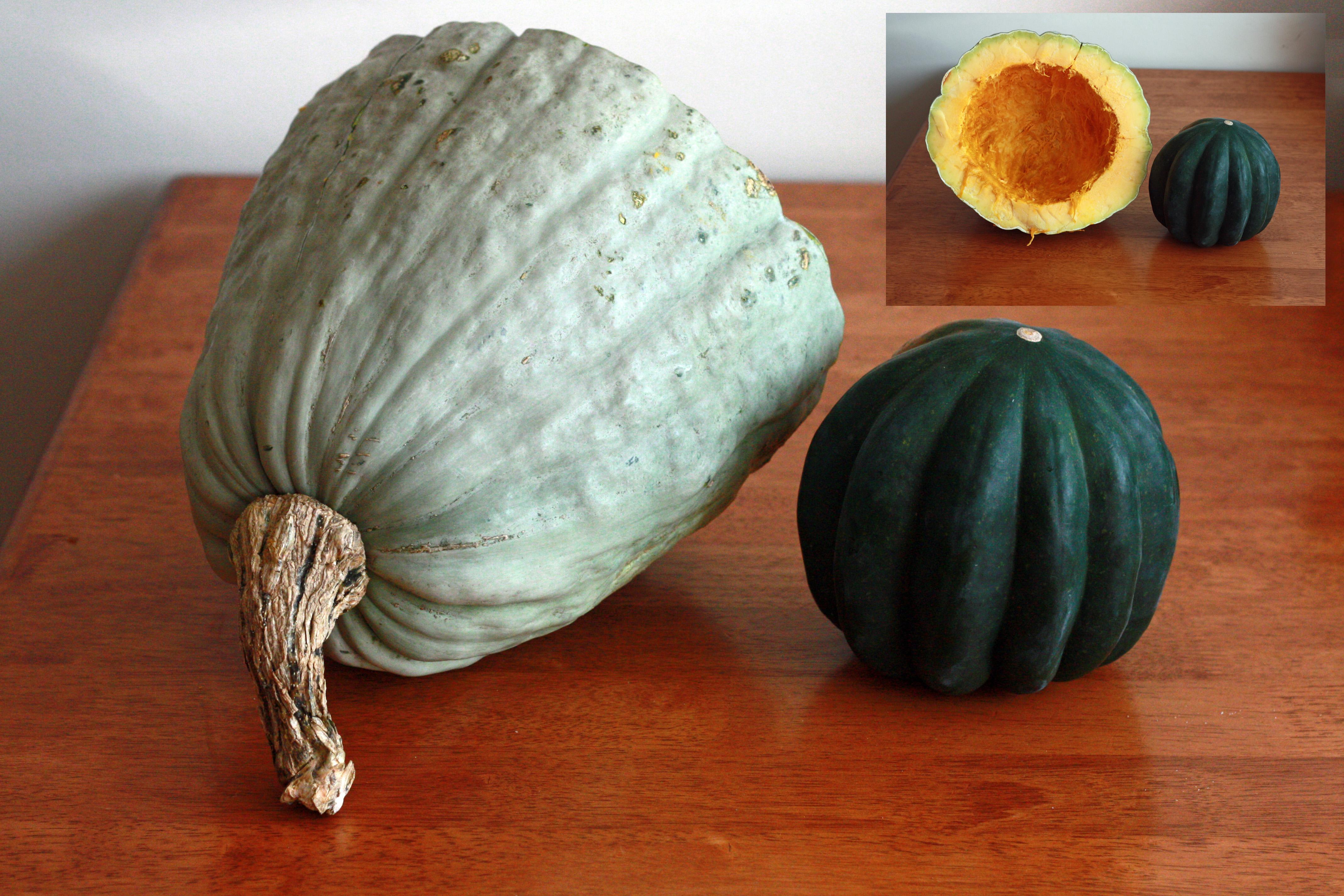 Acorn Squash Comparison